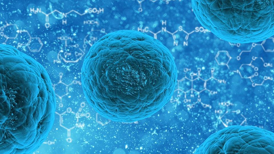 bacteria-163711_960_720 Bancaggio cellule staminali